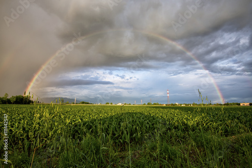beautiful rainbow at sunset over a corn field