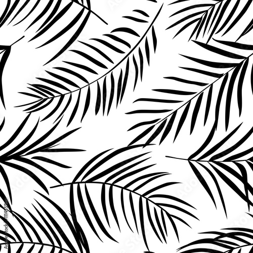 Tropical palm leaves black and white - 111455969