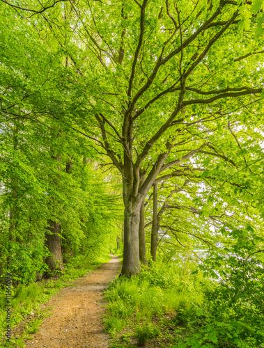Poster Water planten Natur Laubwald Weg