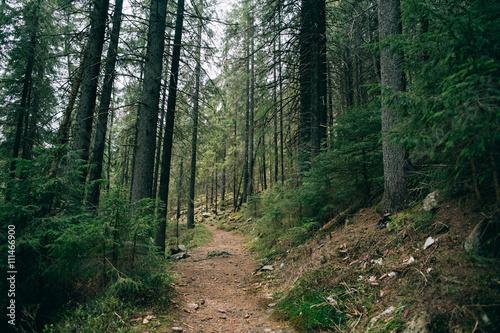 Deurstickers Canarische Eilanden Road trek into the mountain Misty green forest for hiking, Travel