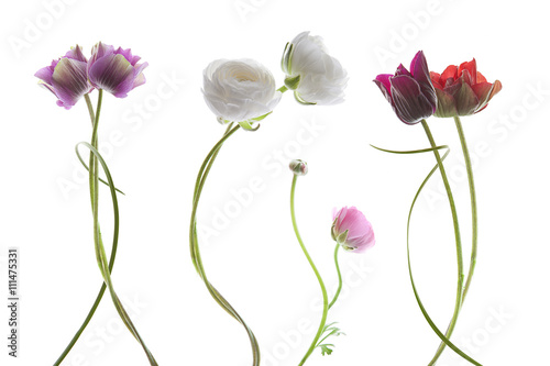 Fotografiet  flowers on white background