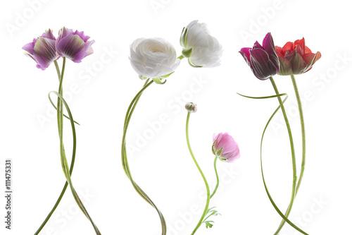 Plagát, Obraz  flowers on white background