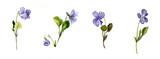 watercolor blue wild flowers - 111475763