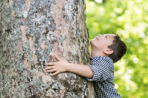 Poster Junge blickt begeistert am Stamm eines alten Baumes hoch