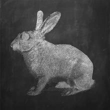 Królik. Zwierzę hodowlane. Vintage ilustracja grawerowane na czystym tle.