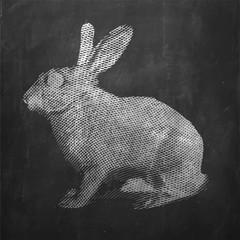 Rabbit. Farm animal. Vintage engraved illustration on clean background.
