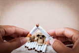 hand holding broken cigarette on Skull Tobacco Cigarettes on woo