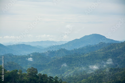 Mountain and trees of the rain forest.