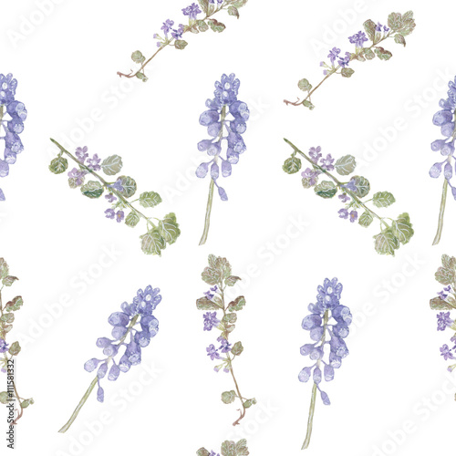 Pattern purple flowers. Field flowers, fine grass pattern watercolor - 111581332