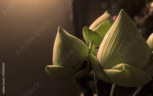 lotus flower for pay homage to a buddha, over and nature light [blur and select focus background] © memorystockphoto