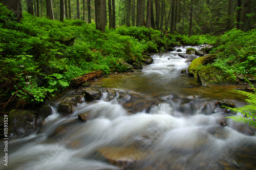 Fototapeta Mountain river in forest.