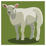 Animal sheep on green, vector - 111628357