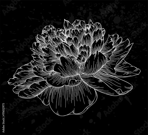beautiful black and white peony flower isolated on background. Hand-drawn contour lines and strokes. - 111652975