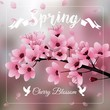 Cherry blossom, Sakura flowers branch on blurred background