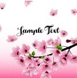 Sakura flowers background with field for text