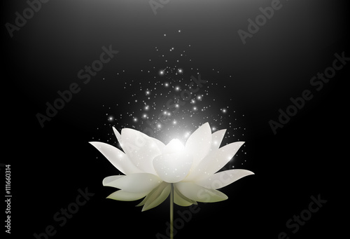 Magic White Lotus flower on black background