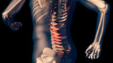 Lower Spine Pain in Human Body Transparent Design - 111664509