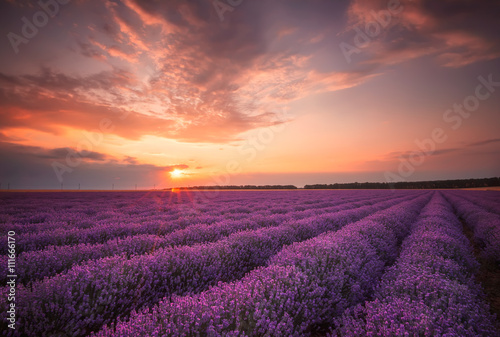 Stunning landscape with lavender field at sunset canvas