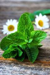 Green fresh mint on  wooden background