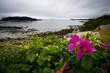 Bright Pink Flowers grow along a rocky rugged coastline.
