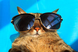 funny cat wearing sunglasses relaxing in the sun, vacation, summer holidays, resort - 111745716
