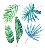 Watercolor tropical leaves set - 111782512