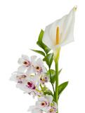 Fototapety white calla lily and white cymbidium