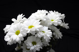 White daisy flower bouquet