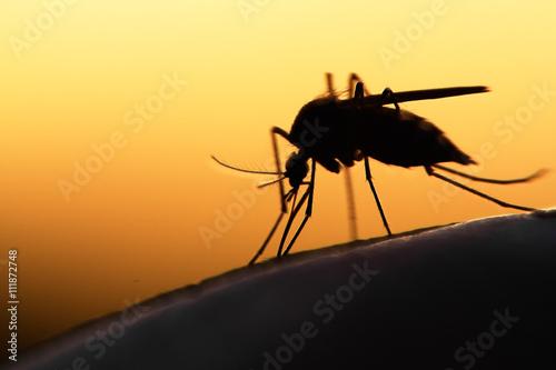 mosquito - 111872748