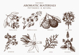 Vector collection of perfumes and cosmetics ingredients sketch. Vintage set of exotic plants for perfumes and cosmetics. Perfumes and cosmetics aromatic materials.