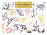 Fototapety Vector collection of hand drawn perfumery materials and ingredients. Vintage set of aromatic plants for perfumes and cosmetics.