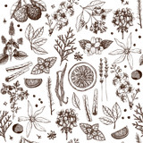 Fototapety Vector seamless pattern with hand drawn perfumery and cosmetics ingredient sketch. Vintage background with aromatic plants for high-quality cosmetics and scented industry