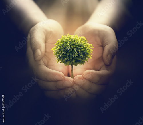 human hands holding a small tree