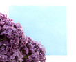soft lilac flowers/ bouquet of violet flowers on the background of the card for inscriptions