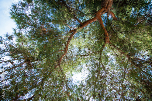 In de dag Bamboo Bottom view background of green forest with evergreen trees