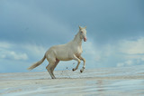 Fototapeta Horses - wolność © meegi