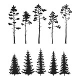 Fototapety Vector set with pine trees isolated on white background
