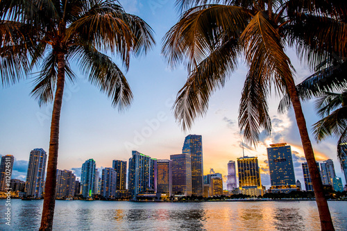 Fotografiet Miami, Florida skyline and bay at sunset seen through palm trees