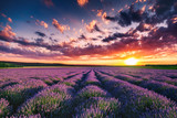 Lavender flower blooming fields in endless rows. Sunset shot. - 112051118