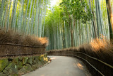 嵐山の竹林 - 112064145