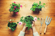 Person holding potted plant on a rustic table