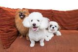 Mixed breed dog three on a sofa