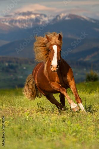 Red horse with long mane run gallop against mountain landscape © callipso88