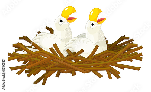 Aluminium Zoo Cartoon young eagles - isolated - illustration for children
