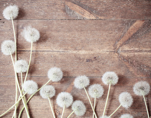 dandelions on a aged wooden background