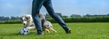Hund und Herrchen spielen zusammen Fußball