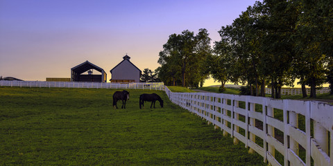Horse farm at dawn © jackienix