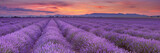 Sunrise over fields of lavender in the Provence, France - 112190945