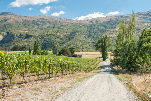 Gibston Valley, Central Otago wine region on the South Island in New Zealand is mostly famous for its Pinot Noirs and white wines Poster