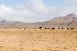 pastore con il gregge di pecore e capre - 112198954